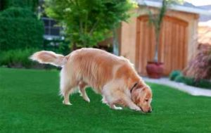 Artificial grass and pets