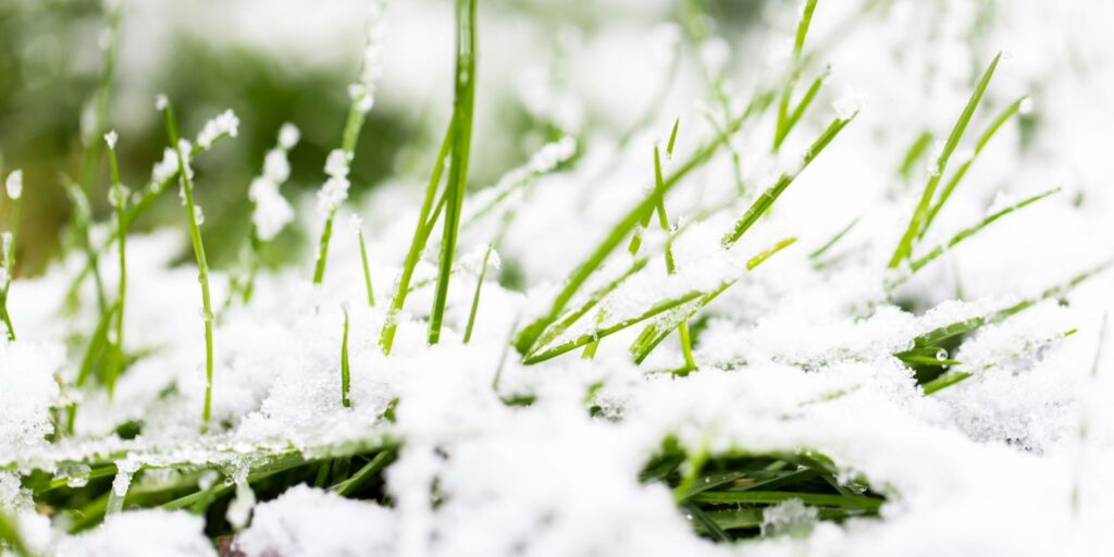 install artificial grass in the winter